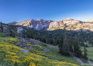 Albion Basin, Little Cottonwood Canyon, Utah