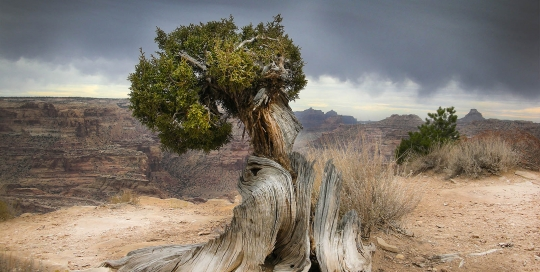 Edge of the Wedge, San Rafael Swell, Utah