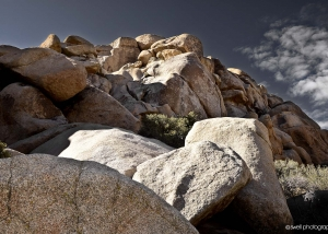Rocks, Morning, Joshua Tree National Park